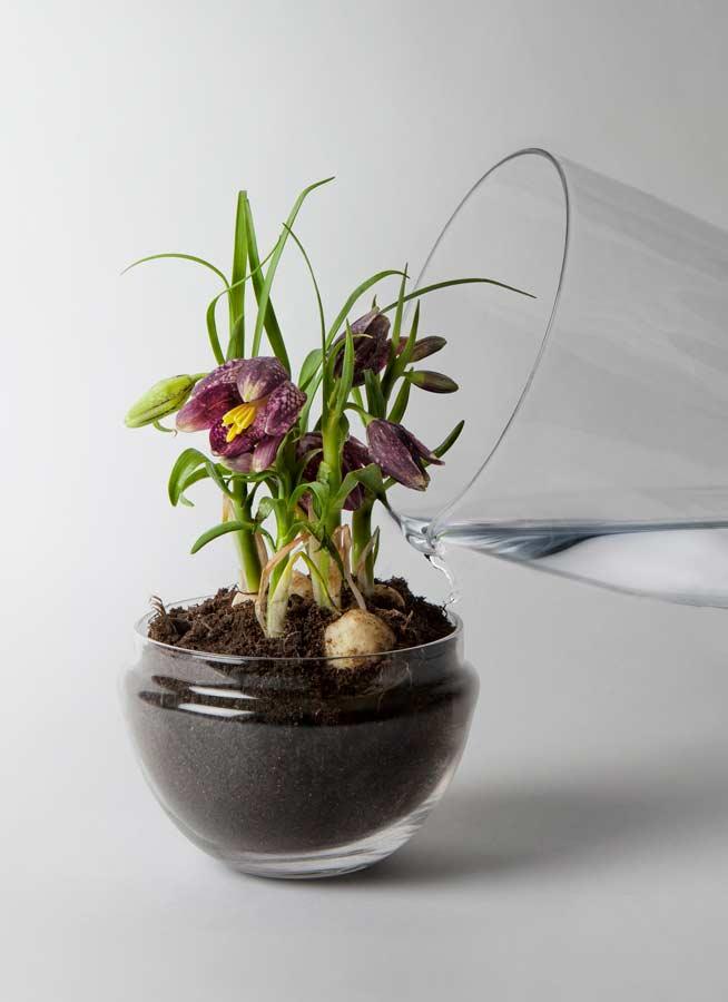Grow Växthus glasklar